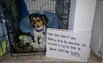 bad_dogs_publicly_shamed_640_14