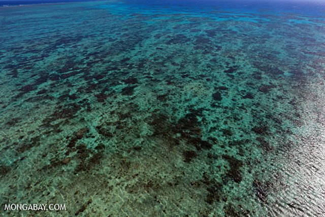 Aerial view of the Great Barrier Reef. Photo: Rhett A. Butler