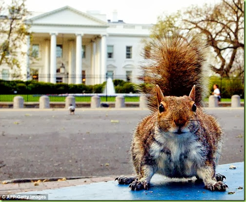 whitehouse squirrel