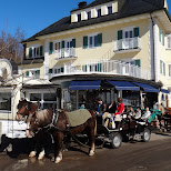 horses about to take us up to neuschwanstein castle in Füssen, Bayern, Germany
