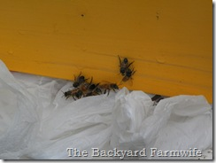bees day one 02
