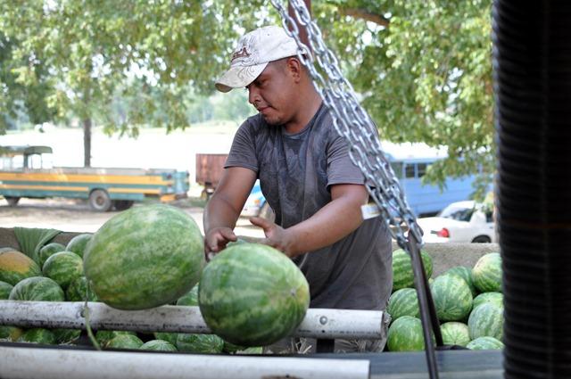 [watermelons%252011%2520071211%2520%252831%2529%255B7%255D.jpg]