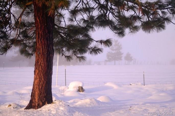 Snowfall3