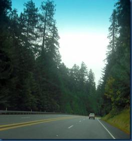 Redwoods (10)