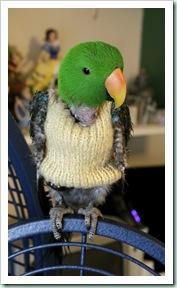 bird jumper 11 03 13