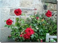 19 rose