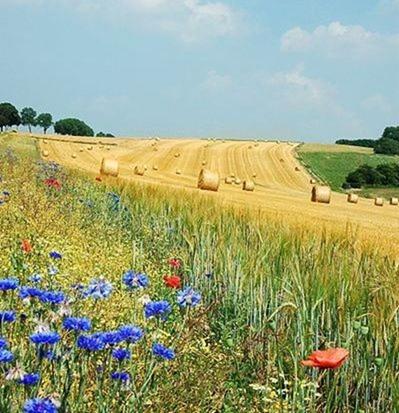 399px-Field_Hamois_Belgium_Luc_Viatour