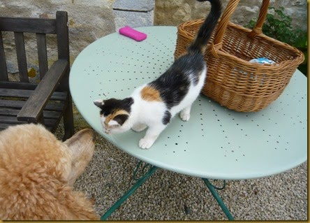 Lulu meets Daisy6