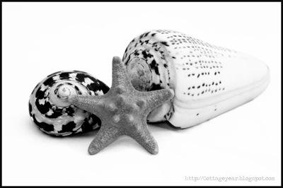 B w shells