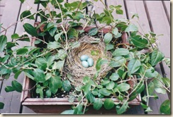 fuschia basket nest