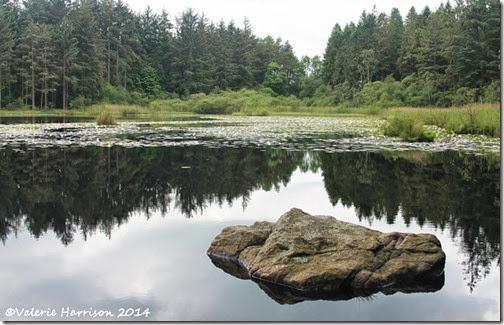 6-Dalbeattie-Loch