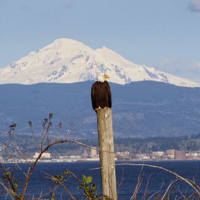 March/April 2014 - 3rd Place - View over Bellingham Bay to Mt. Baker / Credit: Dave Chase