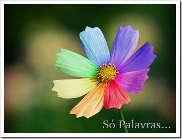 15rainbow-daisy