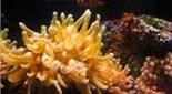 Biodiversité anémone symbiotique