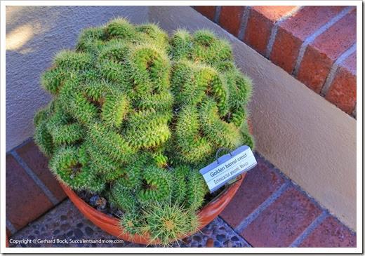 131203_TucsonBotanicalGarden_032