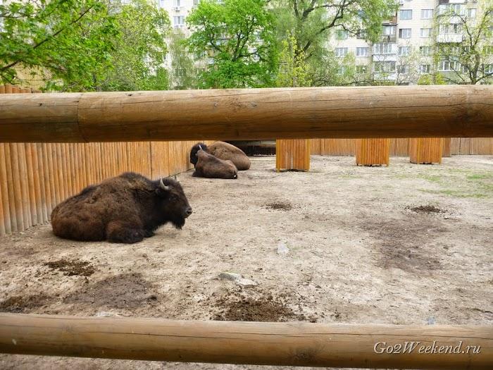 Kiev_Zoo_12.jpg