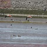 Arica - Parque Nacional Lauca  (3 de 10).jpg