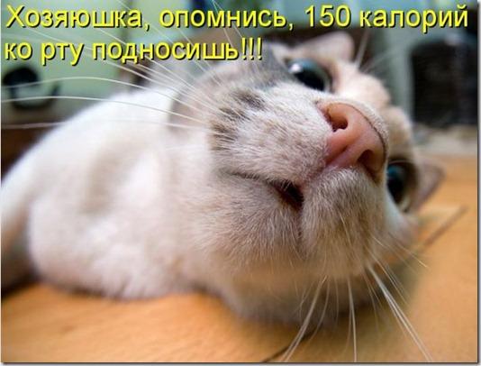 kotomatrix_48