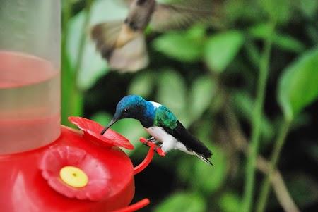 Pasare colibri in Ecuador