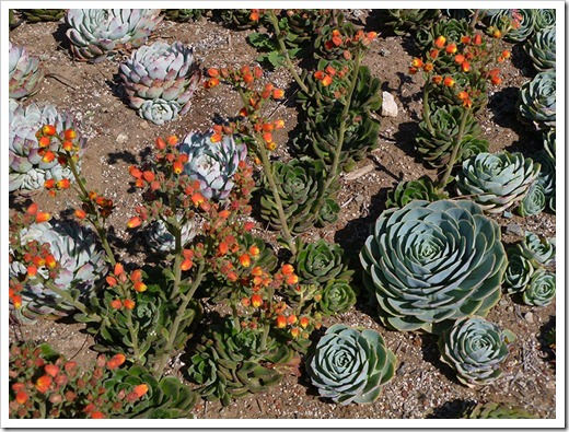 111001_succulent_gardens_06_fixed