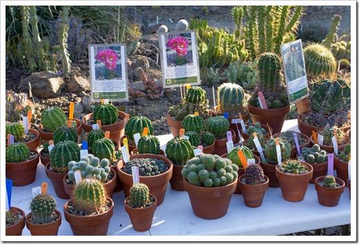 121013_RBG_fall_sale_cactus-table