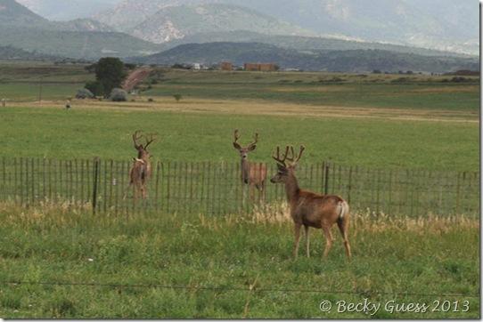 08-07-13 deer near LaVeta 04