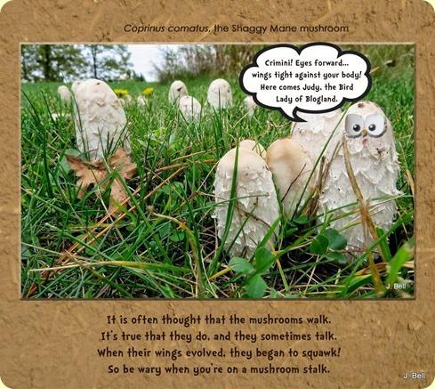 owlshrooms copy