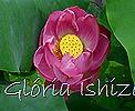 Glória Ishizaka - Flor de Lótus -  Kyoto Botanical Garden 2012 - 11