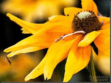 blom_20120814_gul1