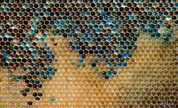 العسل الملون