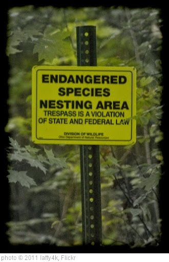 'Clear Fork Reservoir: Endangered Species Nesting Area' photo (c) 2011, laffy4k - license: https://creativecommons.org/licenses/by/2.0/