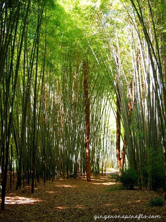 bamboo in Cherokee, NC