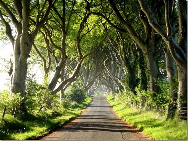 The-dark-hedges-007
