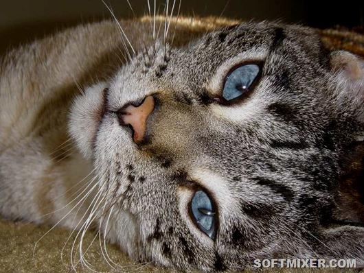 35_wallpaper_cats