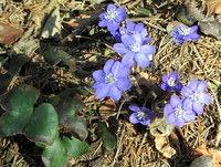 Prvo pomladansko cvetje