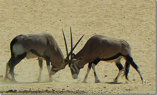 Namibia_DSCN5752
