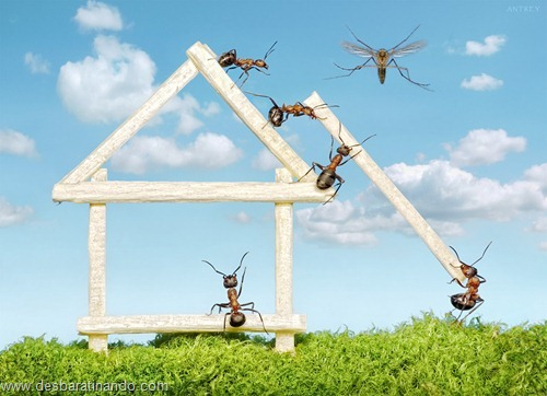 formigas inacreditaveis incriveis desbaratinando  (45)