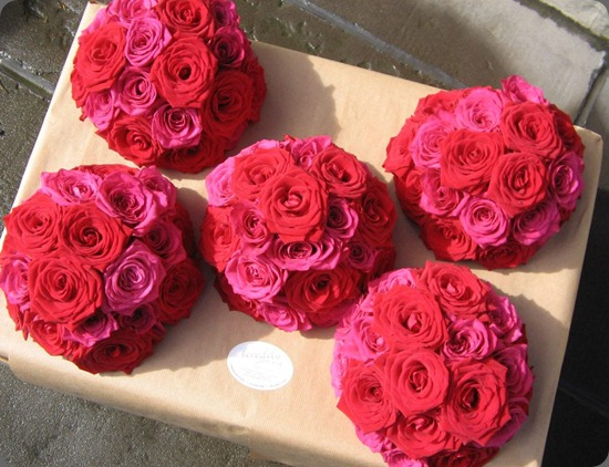 575416_10151806243756992_246947836_n love lily