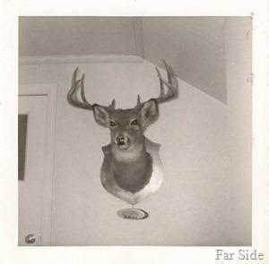 The Deer November 1955