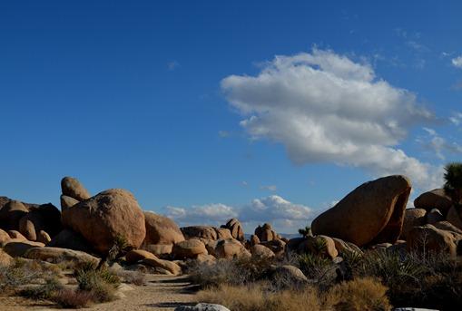the desert 1_092DSC_0092