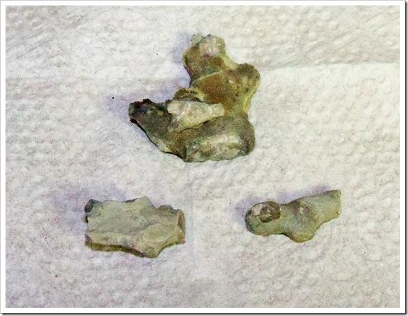 Bryozoan fossil