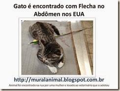 Gato flecha abdomen