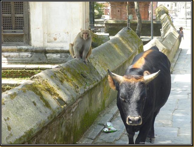 Nepal 1684