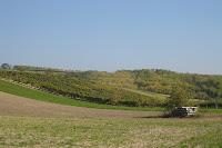 Impressionen Weinherbst 2010