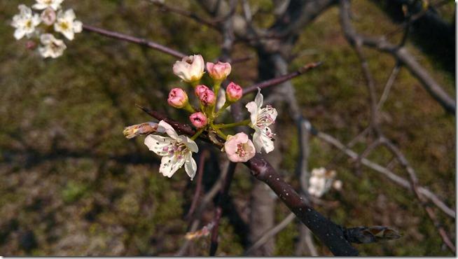 Spring 03 (2b)