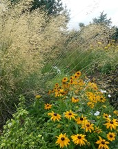 prairie garden3