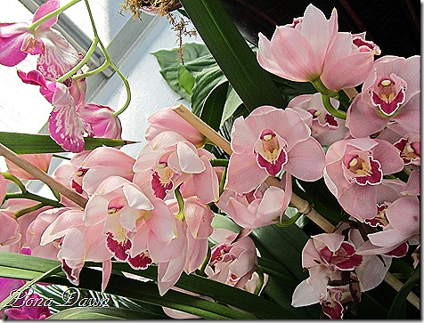 FPC_Orchids_Pink3