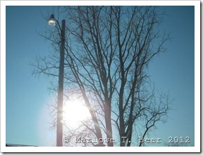 tn_2012-01-19 Winter (1)