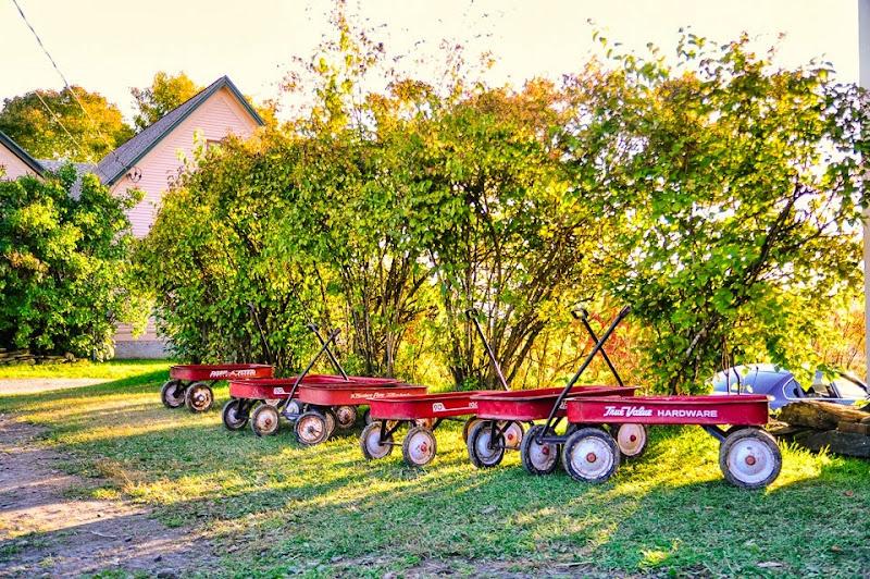 Chapin orchard-8890