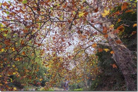 autumn-colors-fall-021